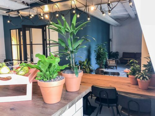 Terra cotta planter with plants