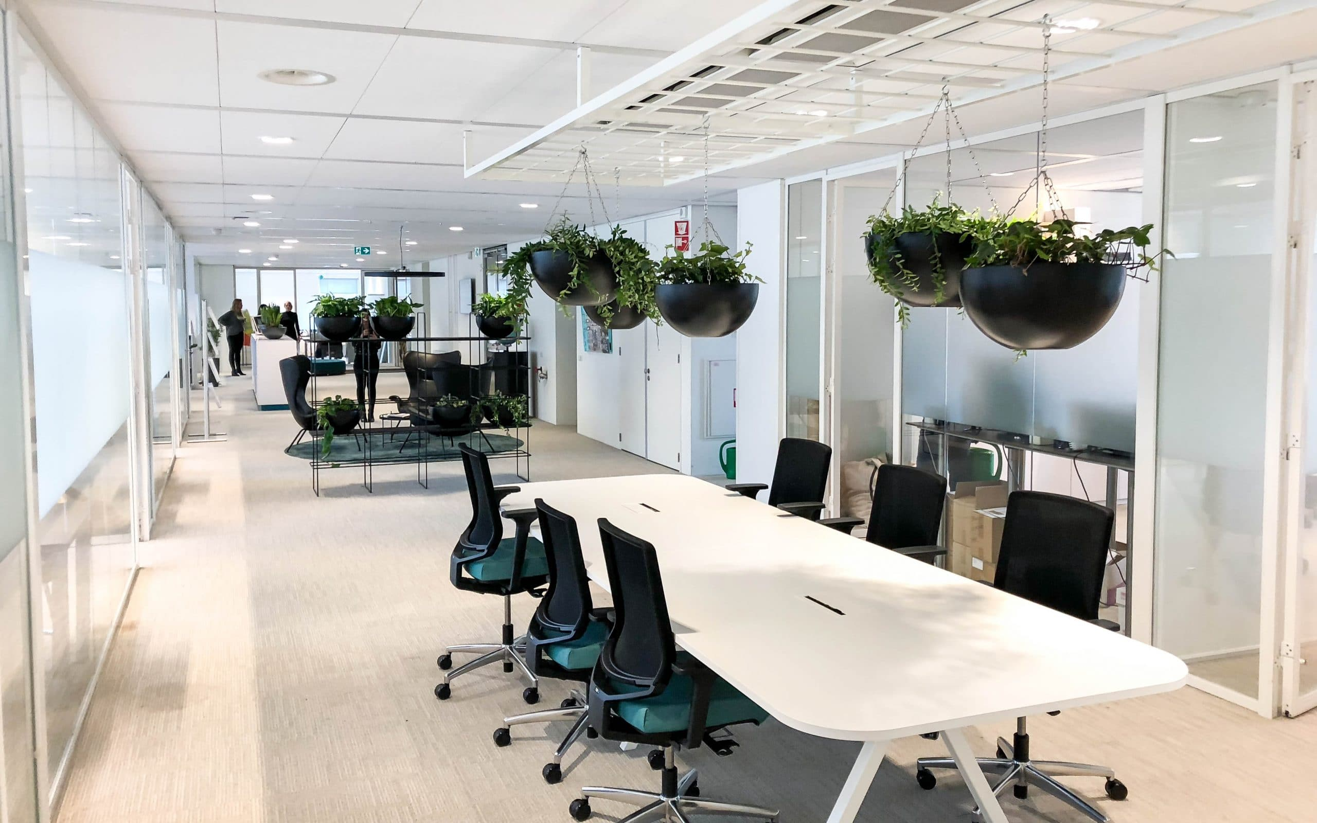 Green office with hanging plants
