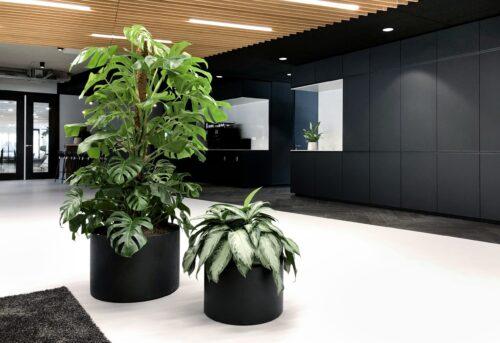 Monstera and Aglaonema in black concrete look planter