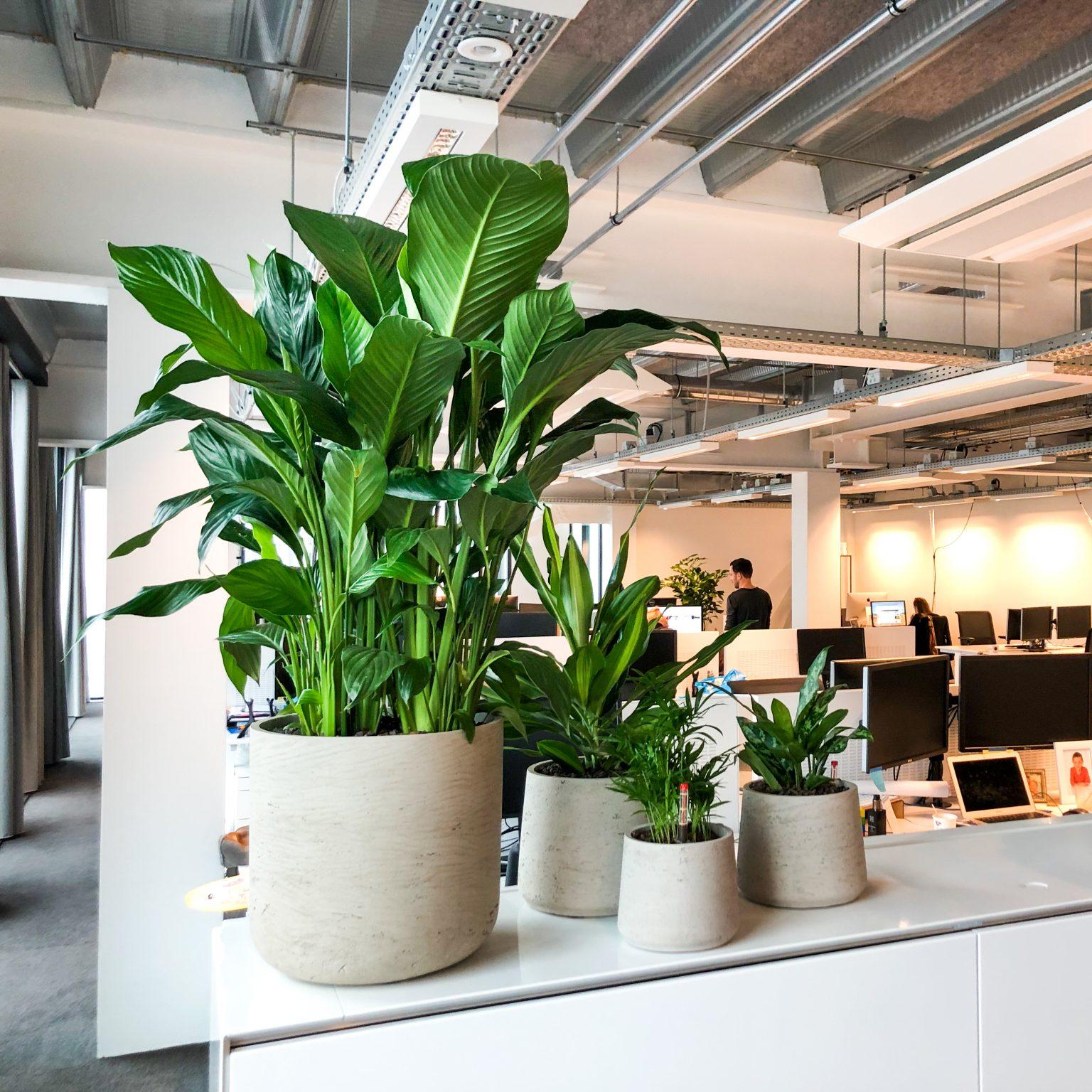 diverse grijze plantenbakken met planten