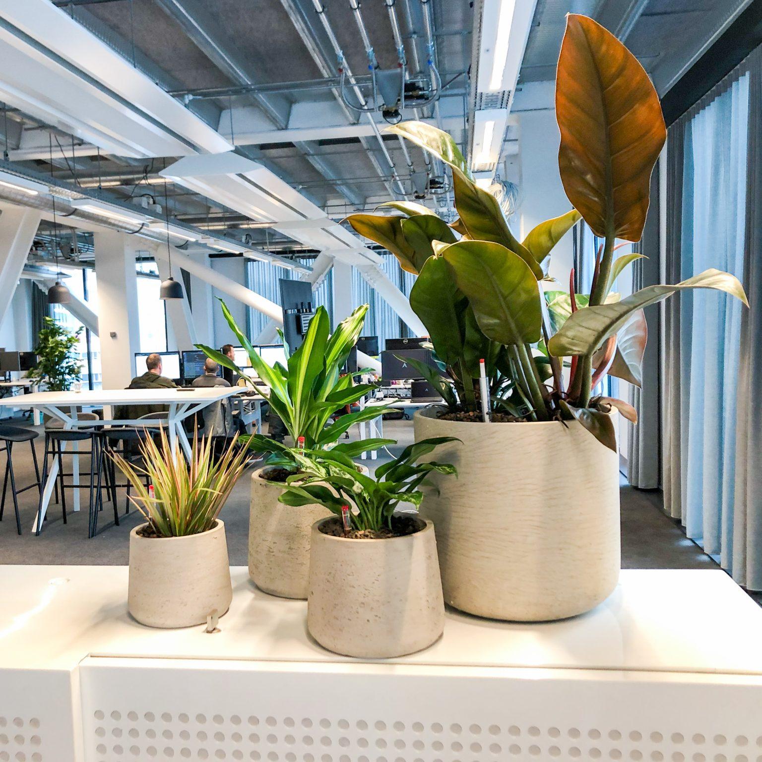 groep planten in grijze plantenbakken