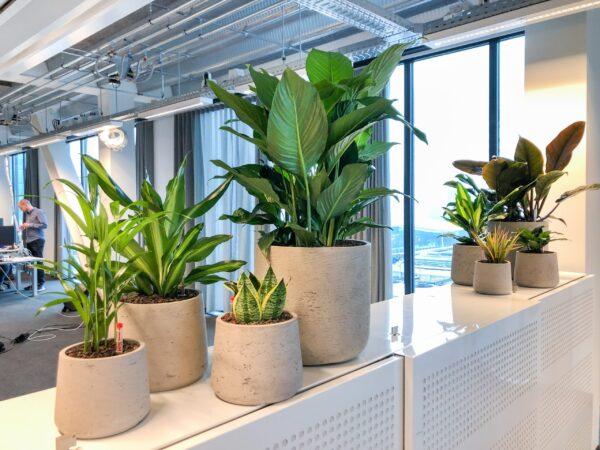 plantengroep op kast