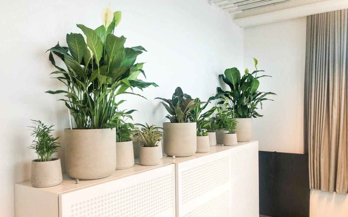 Plantengroep in kleine plantenbak