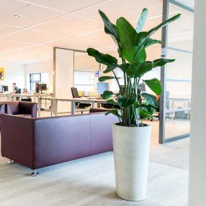 Grote kantoorplant april