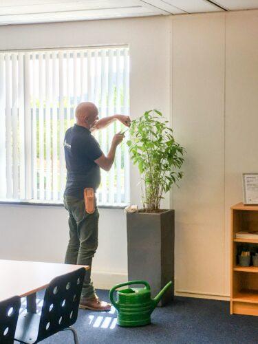 Plant onderhoud