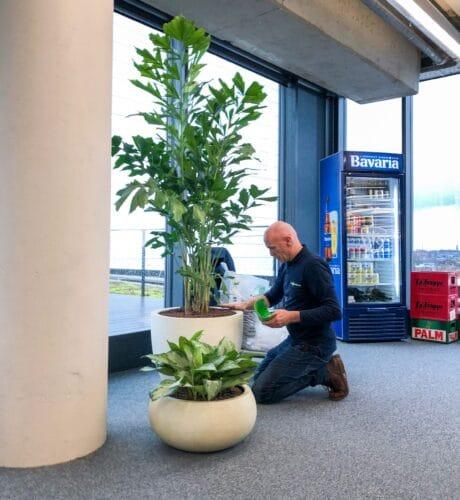 onderhoud hoogendoorn projectbeplanting
