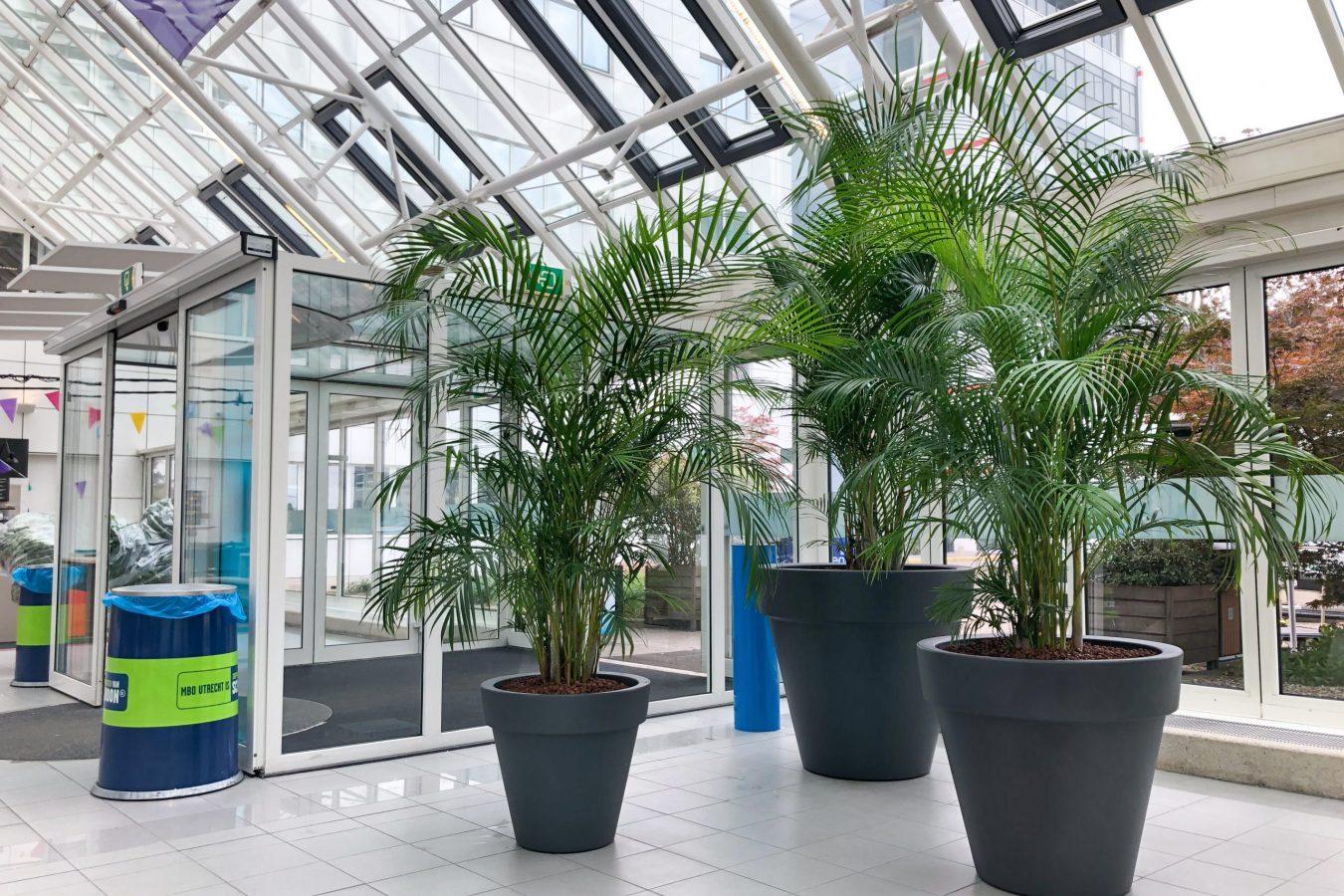 Grote hydrocultuur planten op school