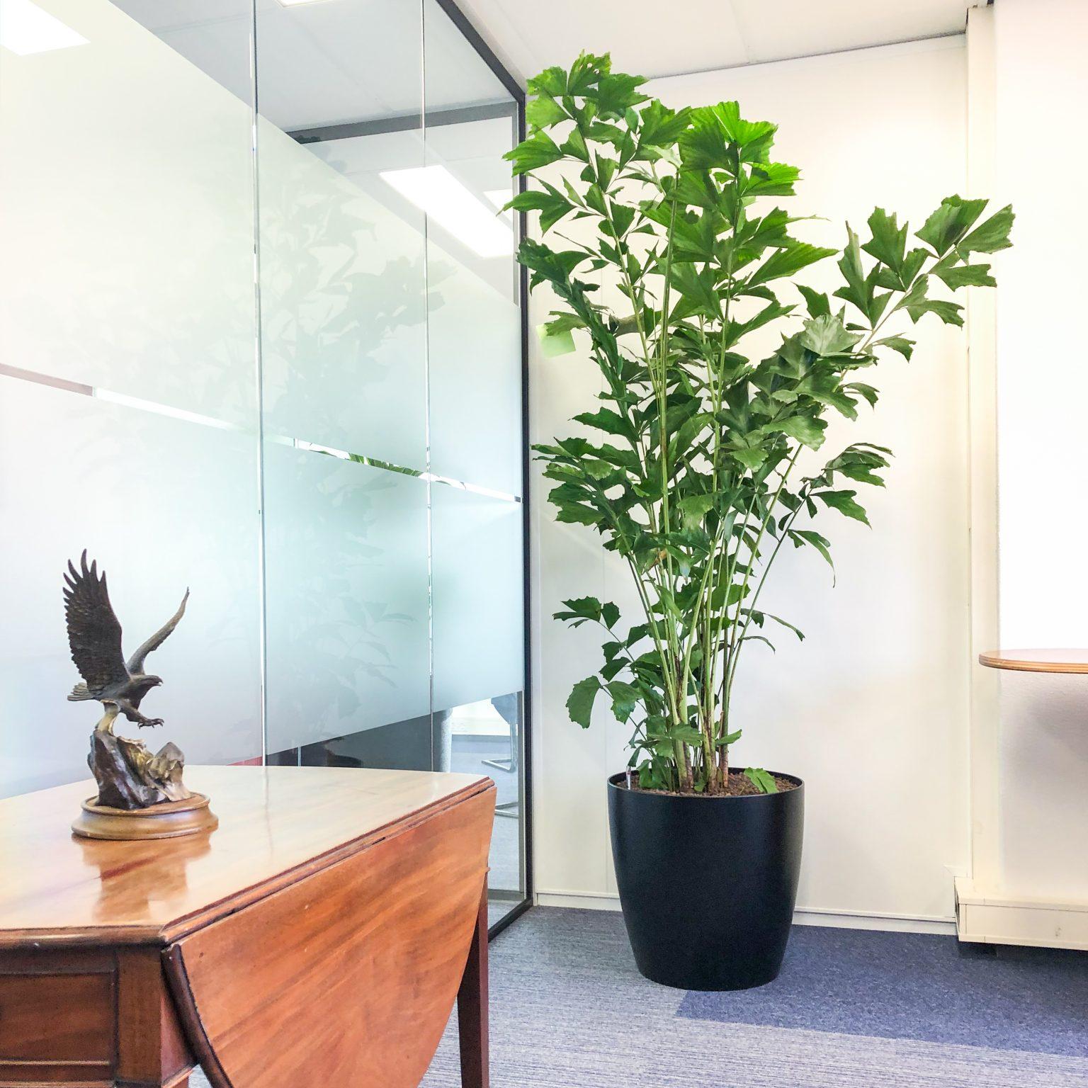 Planten voor een goede luchtkwaliteit op kantoor