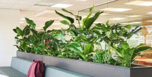 Plantenbak maatwerk diverse beplanting