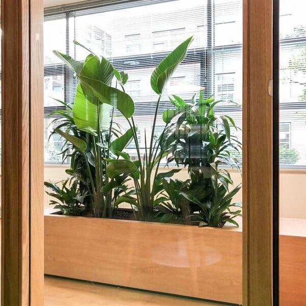 Roomdivider diverse planten