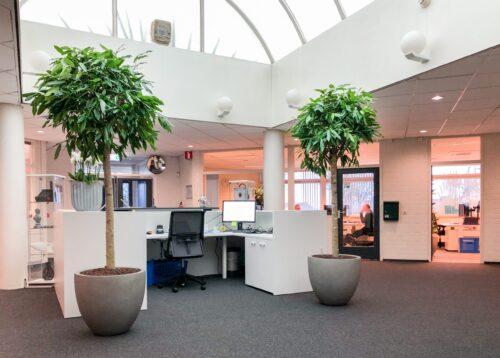 Grote planten op kantoor