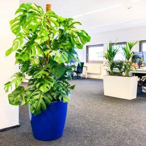 kantoorplant hoogendoorn projectbeplanting