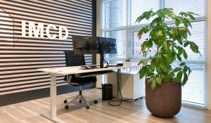 Schefflera amate kantoorplant