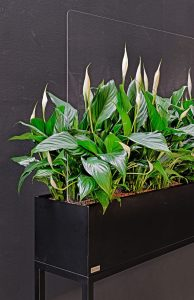 Gronn plantenbak met plexiglas