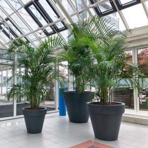 grote kantoorbomen