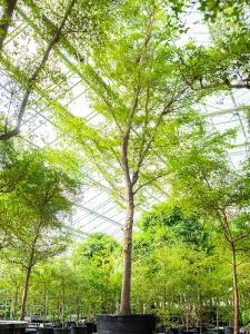 enorme boom op kantoor
