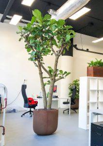 boom op kantoor