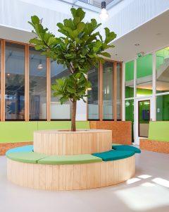 Ficus lyrata in entree