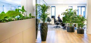 Gezonde planten op kantoor