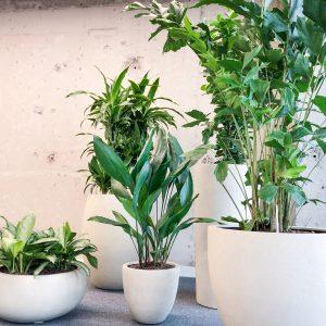 Gezonde plantengroep op hydrocultuur