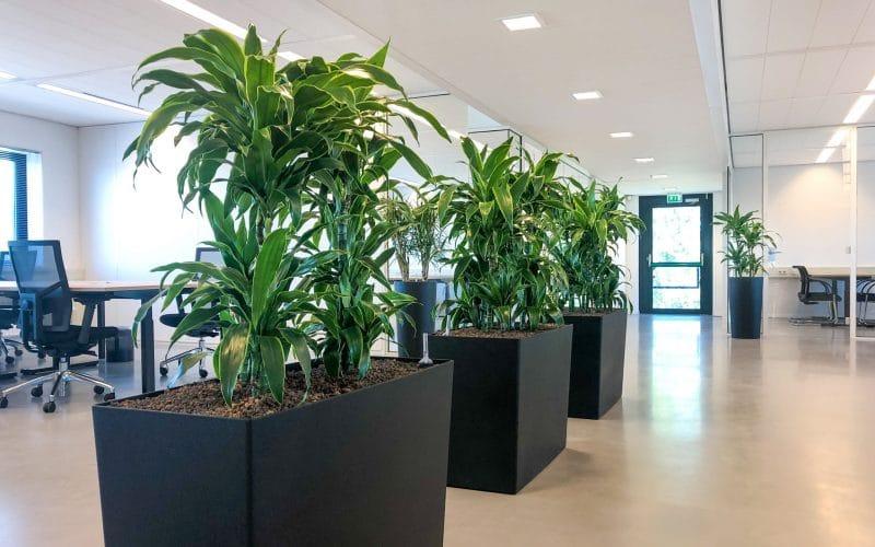Zwarte plantenbak als roomdivider