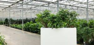 Luchtzuiverende plantenbak