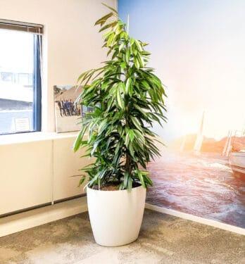 Luchtzuiverende planten Apeldoorn