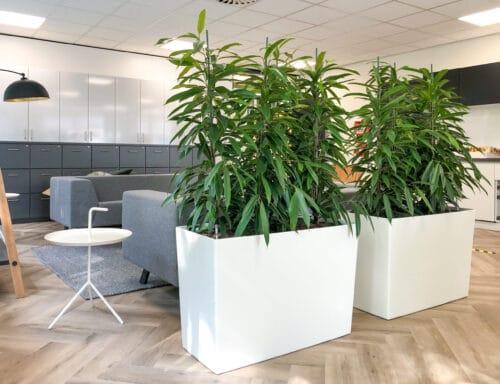 Room dividers met planten Apeldoorn