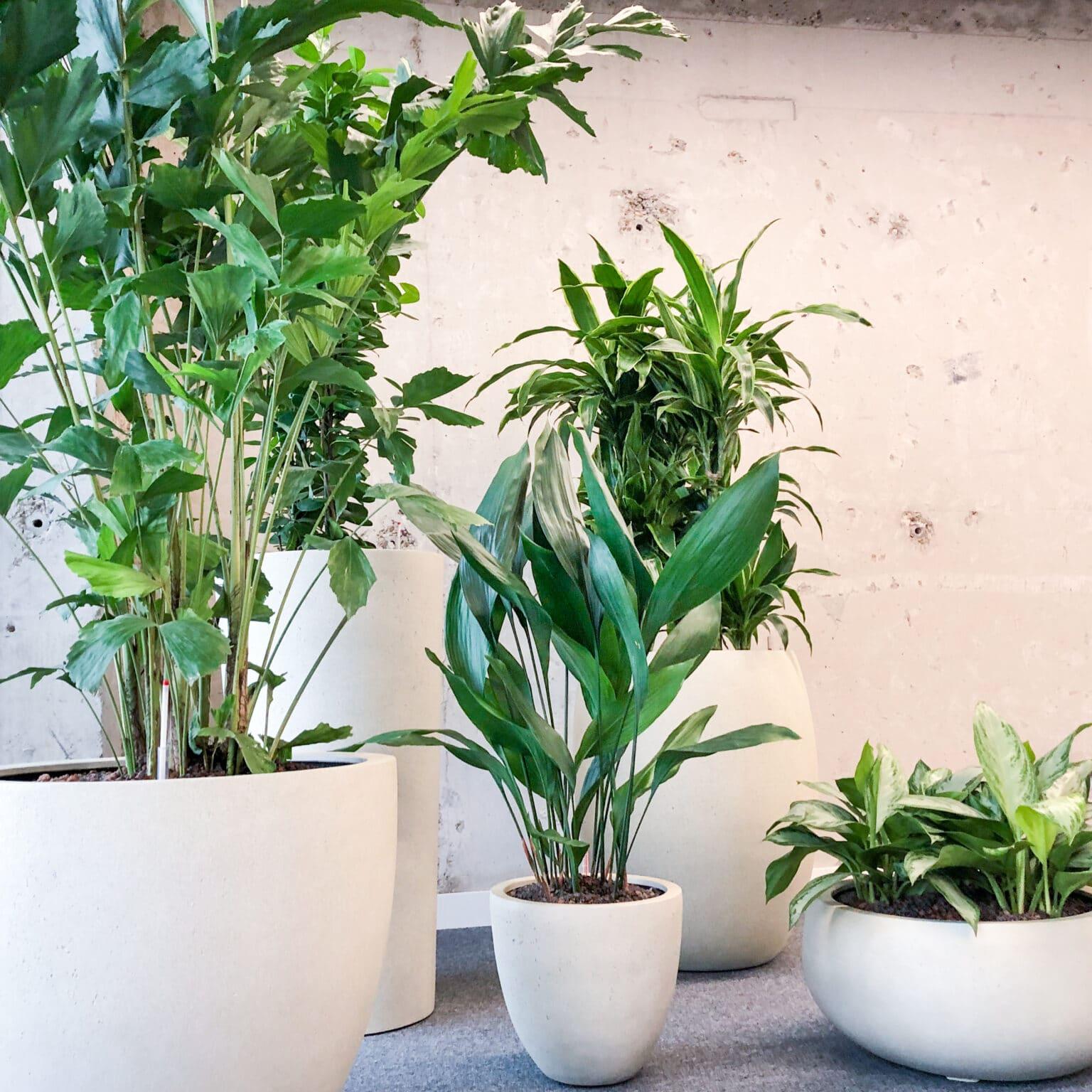 Groep planten in Apeldoorn