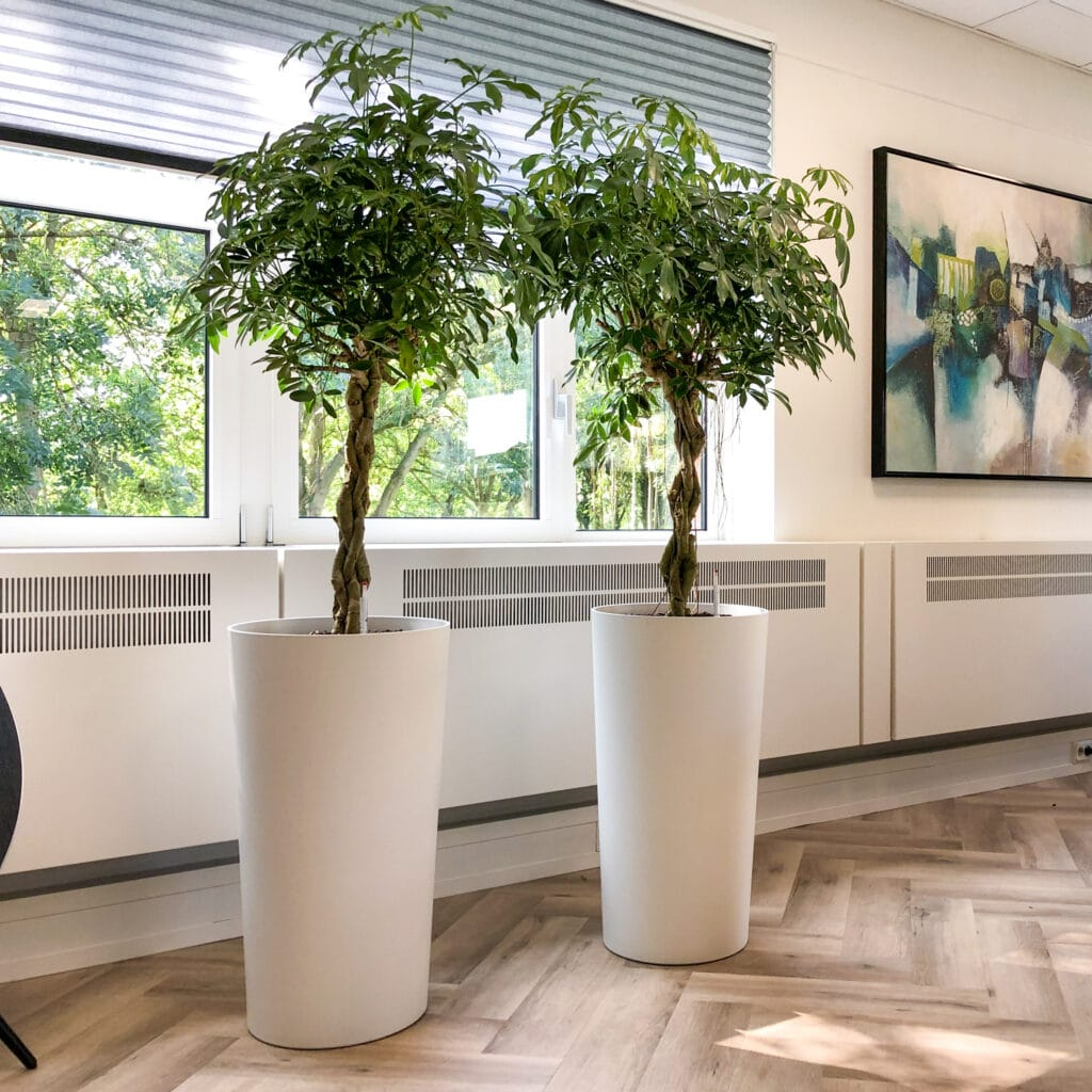Kantoorplanten Nieuwegein