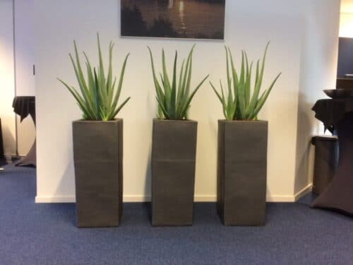 Kantoorinrichting met planten in Deventer