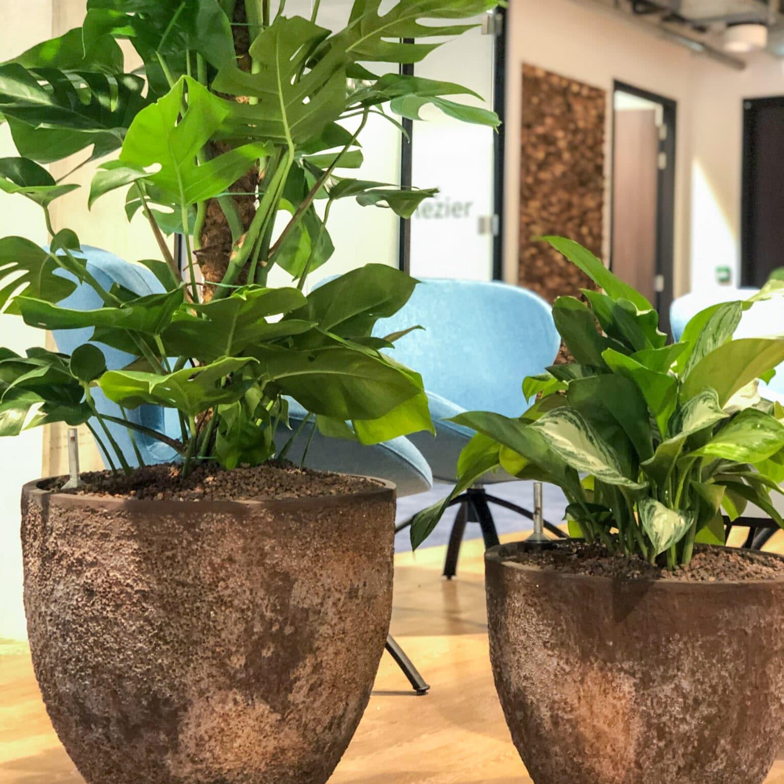 Handgemaakte plantenbakken in Gorinchem