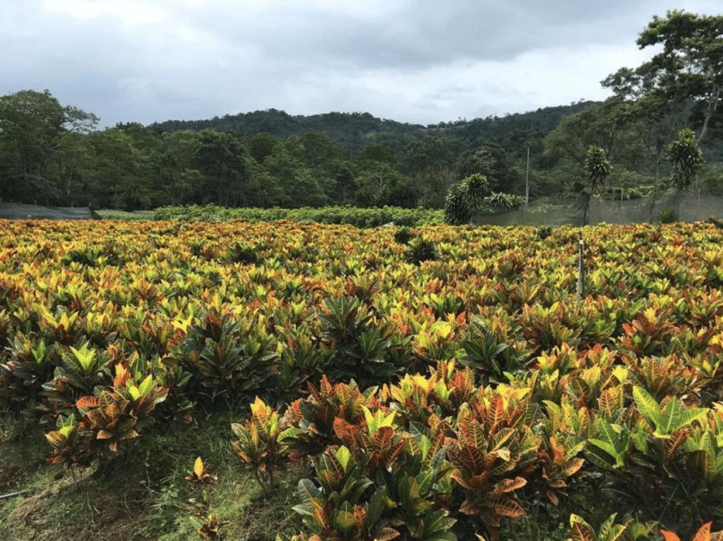 Tropische planten van Hoogendoorn Projectbeplanting