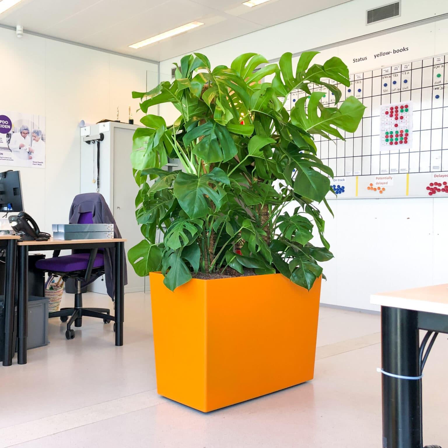 Plant op kantoor in Leiden