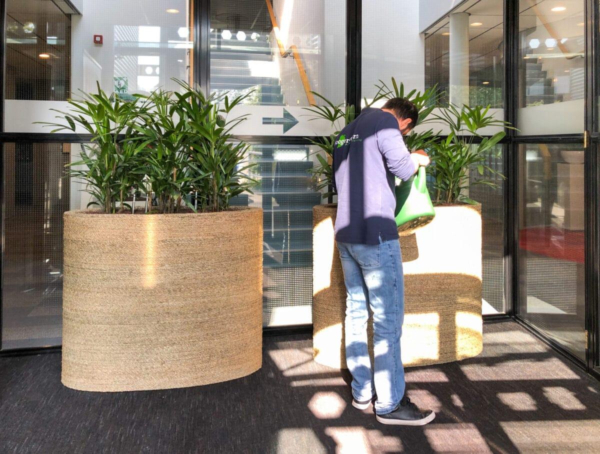 Onderhoud kantoorplanten