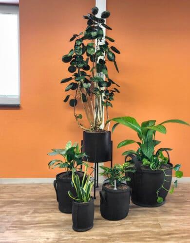 Hydrocultuur planten Doetinchem