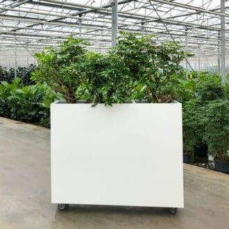Unieke luchtzuiverende plantenbak 2021