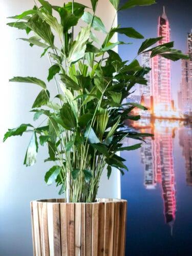 Luchtzuiverende planten op kantoor Eindhoven