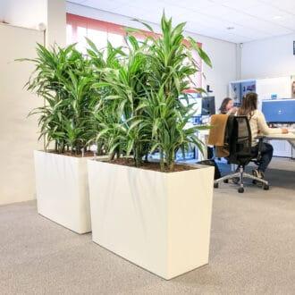 Luchtzuiverende plantenbakken kantoortrends