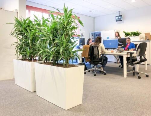 Roomdivider met planten in Doetinchem