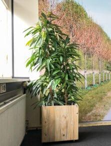 Licht houten plantenbak op kantoor