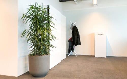 Ficus amstel king bij Ultimaker Utrecht