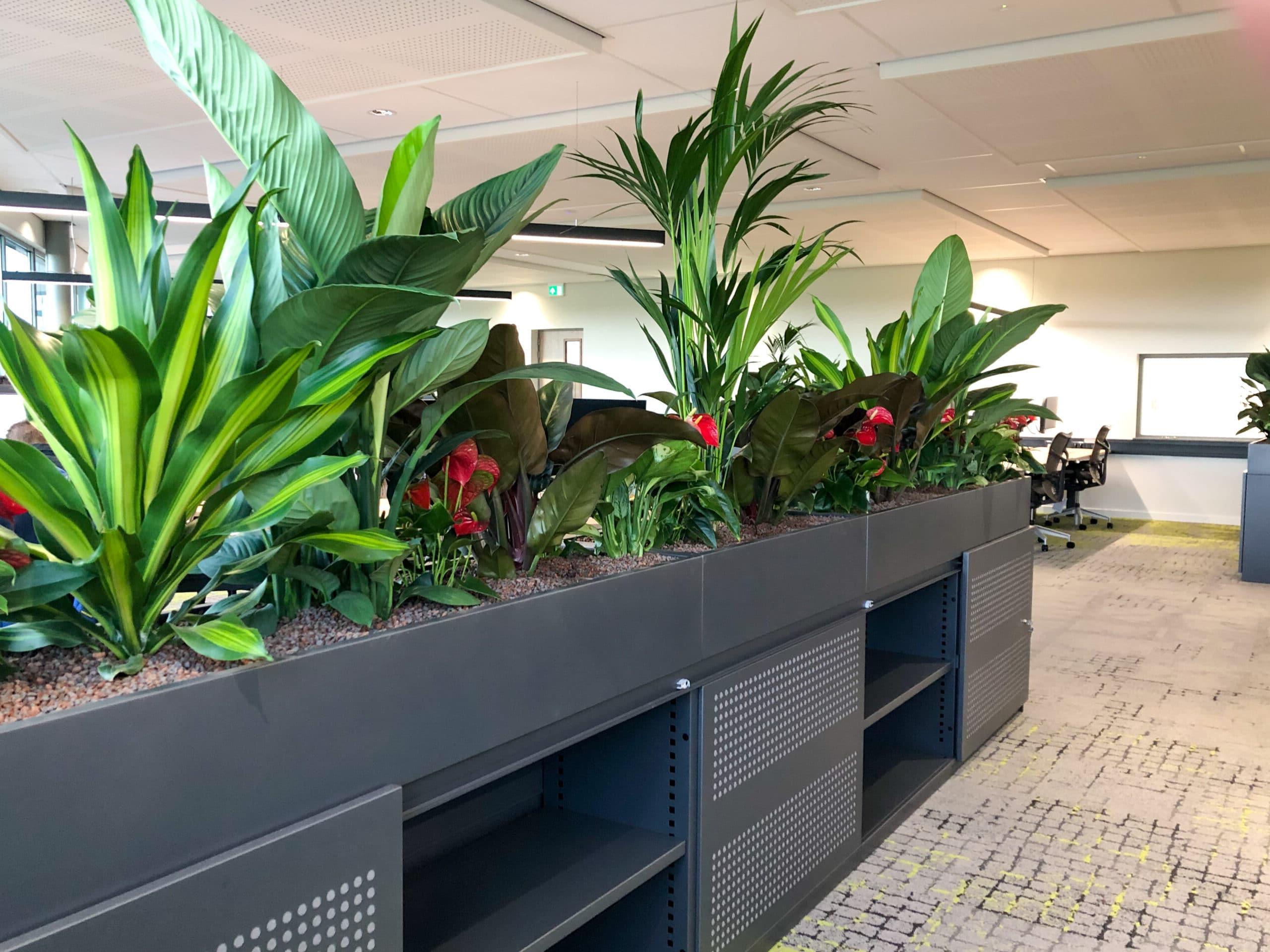 Roomdivider 2021 biophilic design
