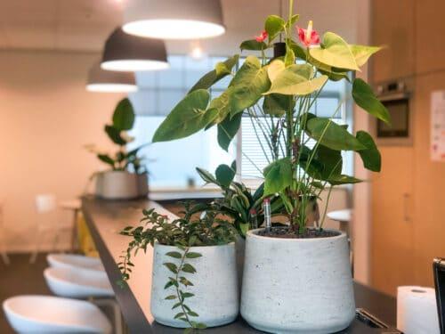 Kleine plantenbakken in Doetinchem