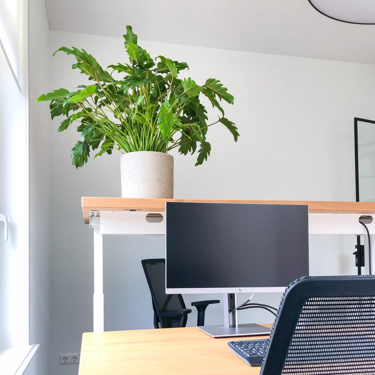 Plant op bureau in Doetinchem
