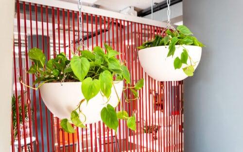 Hangschalen met planten Doetinchem