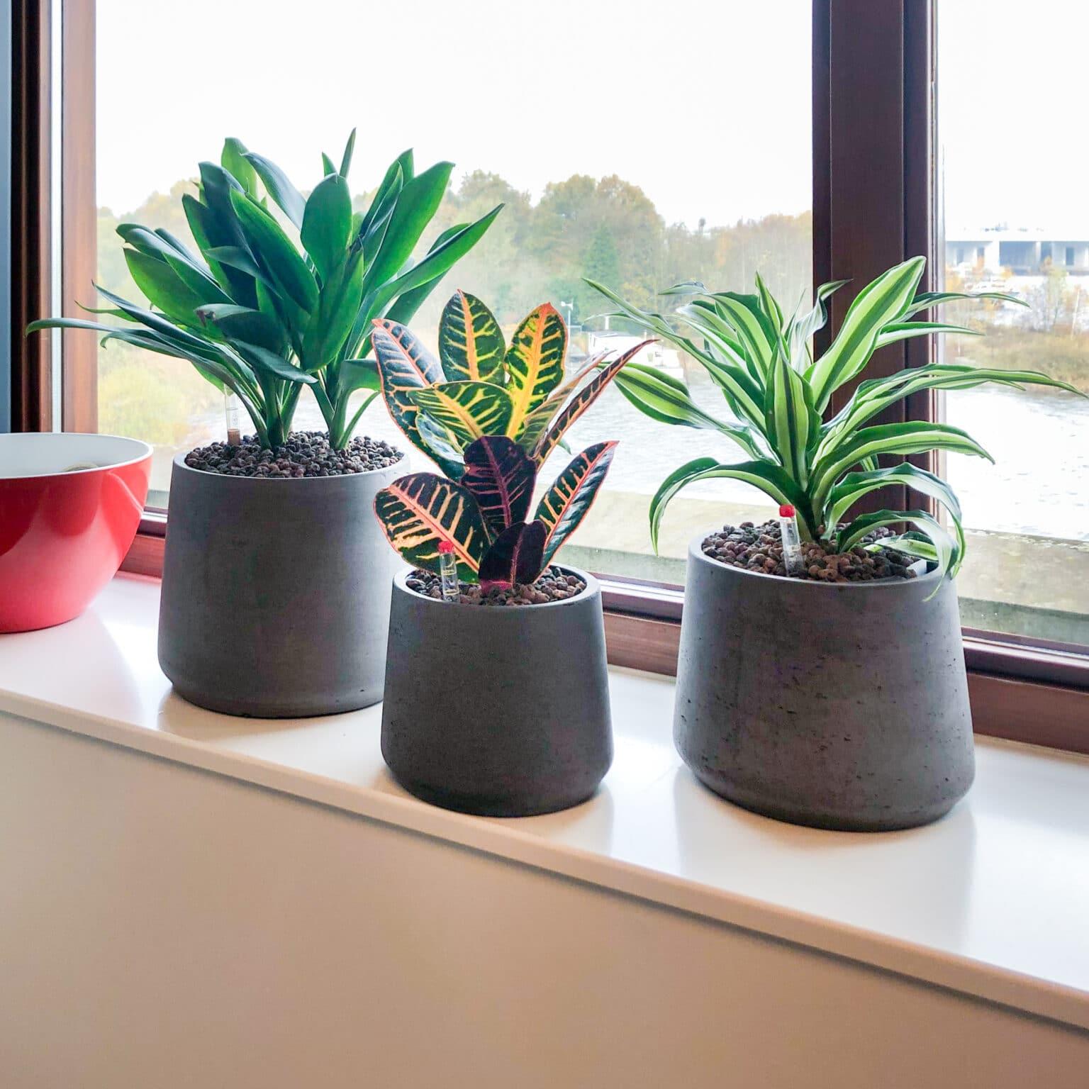 Plantenbakken groep