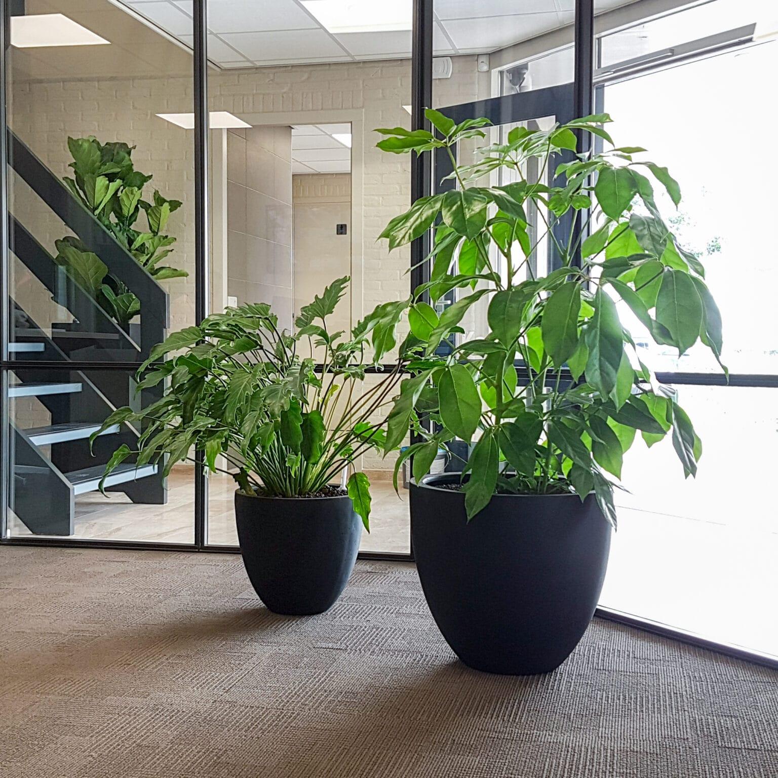 Planten op kantoor Doetinchem