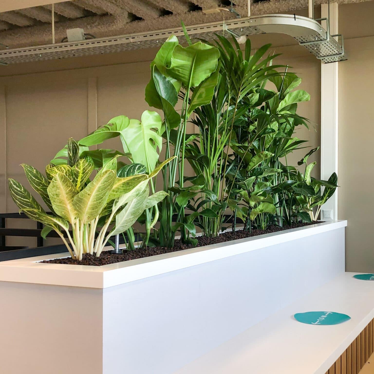 Witte roomdivider met planten kantoortrends