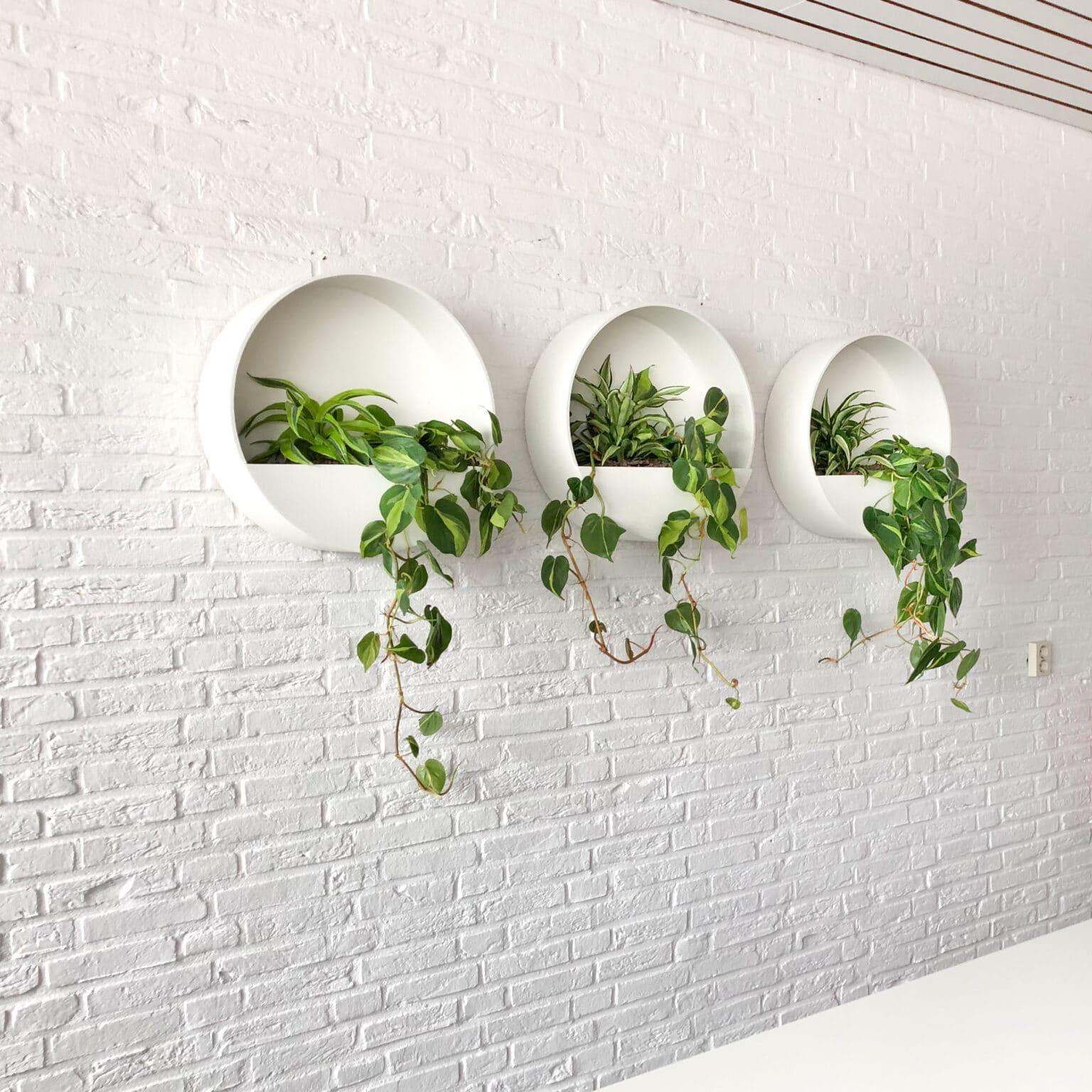 Wallplanters op kantoor in Doetinchem